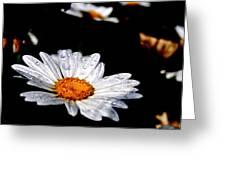 Dancing Daisy Greeting Card