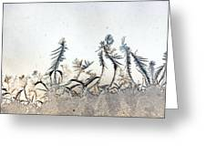 Dancing Frost Flowers Greeting Card