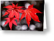Dancing Japanese Maple Greeting Card by Rona Black