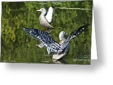Dancing Loons Greeting Card