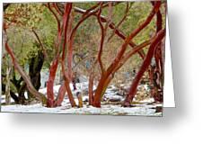 Dancing Manzanitas On The Hillside In Park Sierra-california Greeting Card