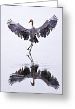 Dancing On Water Greeting Card by Robert Jensen