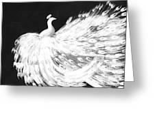 Dancing Peacock Black Greeting Card
