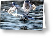 Dancing Swan Greeting Card