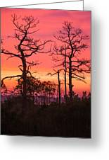 Dancing Trees Into The Fire Greeting Card