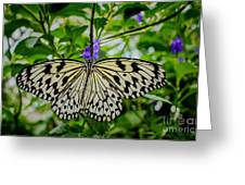 Dancing With Butterflies Greeting Card