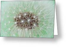Dandelion Abstract 1 Greeting Card