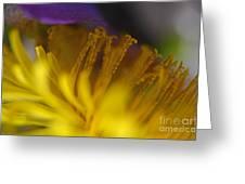 Dandelion Bloom Macro Greeting Card