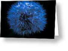 Dandelion Blues Greeting Card