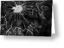 Dandelion Burst Greeting Card