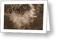 Dandelion Burst Sepia Greeting Card