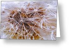 Dandelion Closeup Greeting Card