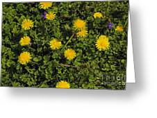 Dandelion Convention Greeting Card