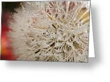 Dandelion Crystals Greeting Card