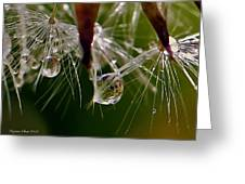 Dandelion Droplets Greeting Card