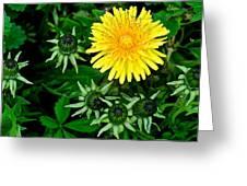 Dandelion Farm Greeting Card