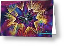 Dandelion Fireworks 003 Greeting Card