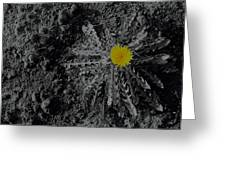 Dandelion Flower Greeting Card