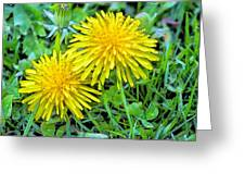 Dandelion Flowers Are Beautiful. Greeting Card