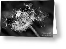 Dandelion Glow Greeting Card