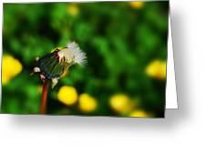 Dandelion In Spring Greeting Card by John Magnet Bell