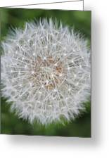 Dandelion Marco Abstract Greeting Card