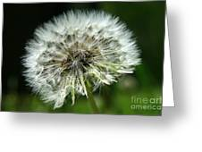 Dandelion Ready Greeting Card