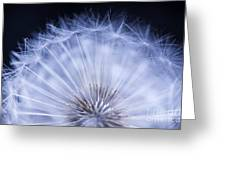 Dandelion Rising Greeting Card