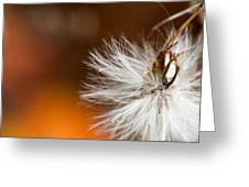 Dandelion Seed Head And Fall Color Background Greeting Card