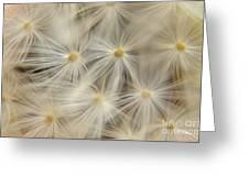 Dandelion Seed Head Macro Iv Greeting Card