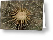 Dandelion Seed Pod Greeting Card by Elery Oxford