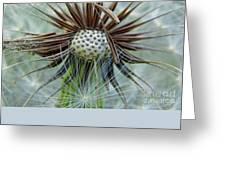 Dandelion Seed Puff Greeting Card