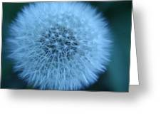 Dandelion Softness Greeting Card