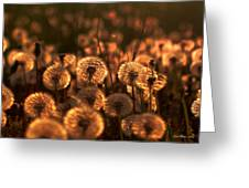 Dandelion Sparkles Greeting Card