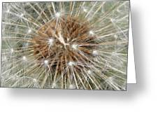Dandelion Square Greeting Card