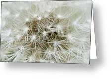 Dandelion Texture Greeting Card