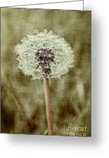 Dandelion Textures Greeting Card