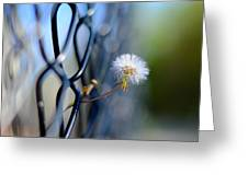 Dandelion Wish Greeting Card