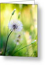 Dandelion Wishes Greeting Card