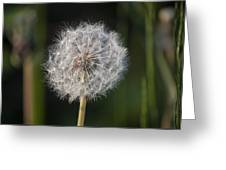 Dandelion With Abstract Grasses Greeting Card