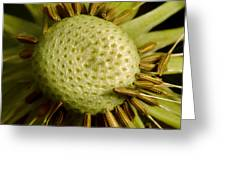 Dandelion With Seeds Greeting Card