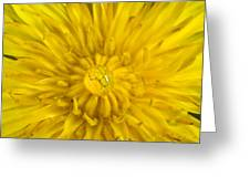 Dandelion With Waterdrop Greeting Card