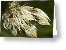 Dandelion's After Rain Greeting Card