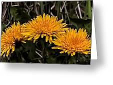 Dandelions In Group  By Leif Sohlman Greeting Card