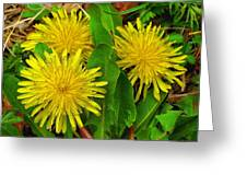 Dandelions Greeting Card