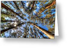 Dandenong Forest Greeting Card by Colin Woods