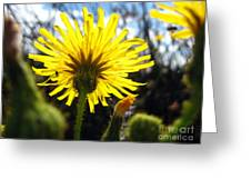 Dandy Day Too Greeting Card