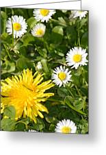 Dandy With The Daisies Greeting Card