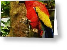 Danse Macaw Greeting Card