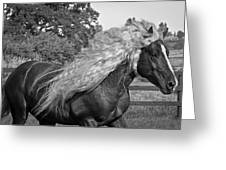 Dante In Black And White Greeting Card